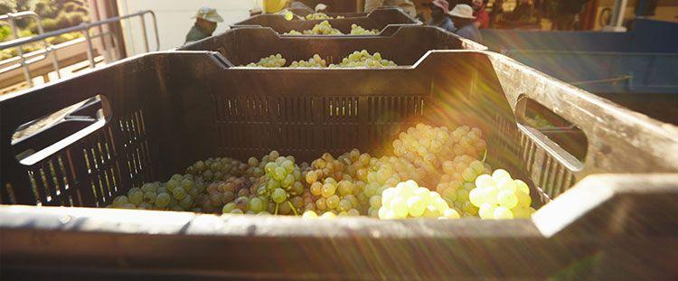 Logística de alimentos y las tendencias que están cambiando el mercado